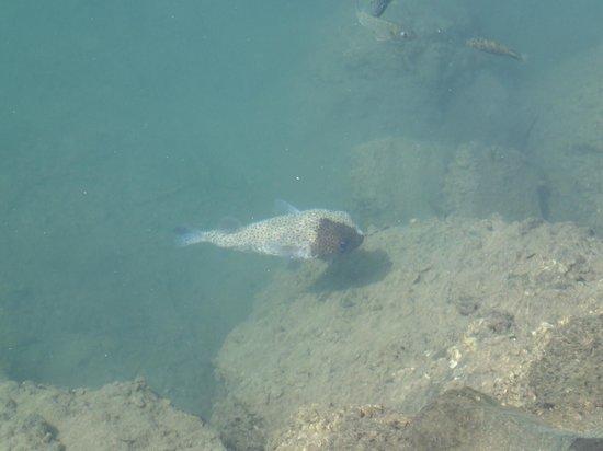 هاواي برينس هوتل ويكيكي: This guy was swimming around the harbor right outside the hotel