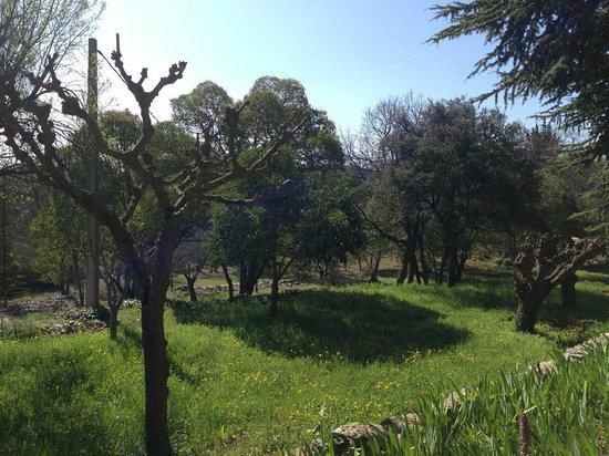 Hotel Domaine du Lac : Une partie du jardin