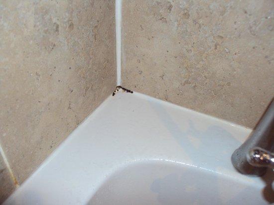 The Lion Hotel: Crack around bath/tiles
