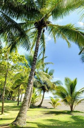 Alma del Pacifico Beach Hotel & Spa: Our palm lined beach