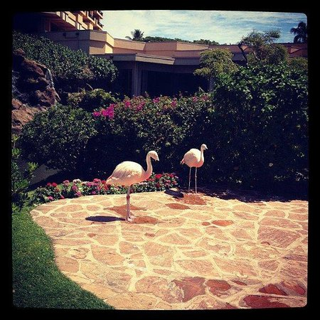 Hyatt Regency Maui Resort and Spa: Flamingos on grounds