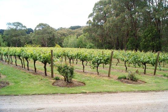 Main Ridge Estate Winery