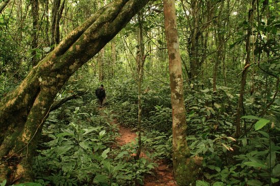 Dja Faunal Reserve Cameroon Africa Top Tips Before You