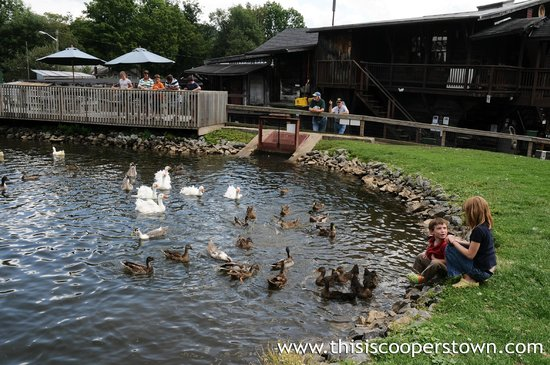 Fly Creek Cider Mill & Orchard: Feed the ducks and geese at the Fly Creek Cider Mill