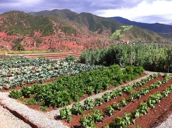 Kasbah Bab Ourika: The vegetable garden.