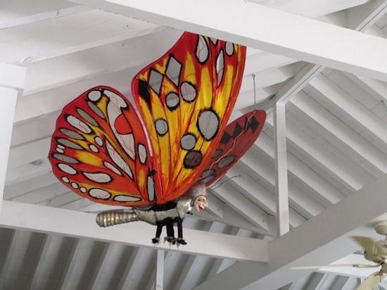 Parrot Key Hotel and Villas: butterfly above cafe