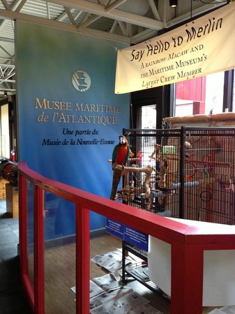 Maritime Museum of the Atlantic : Merlin the parrot