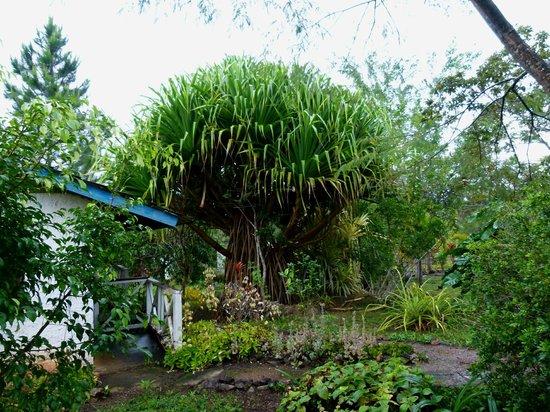Pine Ridge Lodge : Garden.