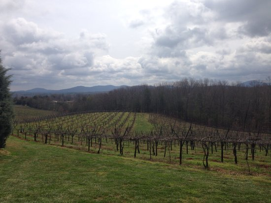 Frogtown Cellars: The vines