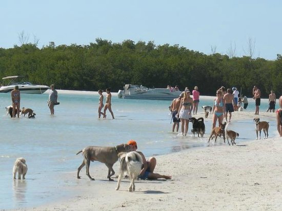 Dog Beach: Dogs running around the beach
