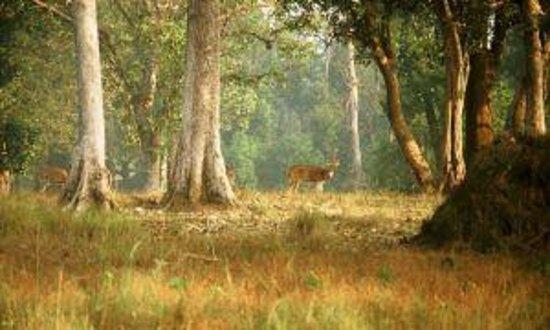 Mahavir Harina Vanasthali Wildlife Park