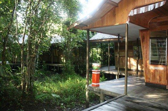 Rimba Orangutan Eco Lodge: Grounds