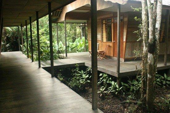 Rimba Orangutan Eco Lodge: Boardwalk and rooms