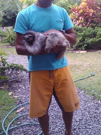 Casa Mariposa : Harry with new baby sloth