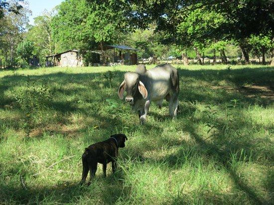 Casagua Horses Tours: Friendly stand-off