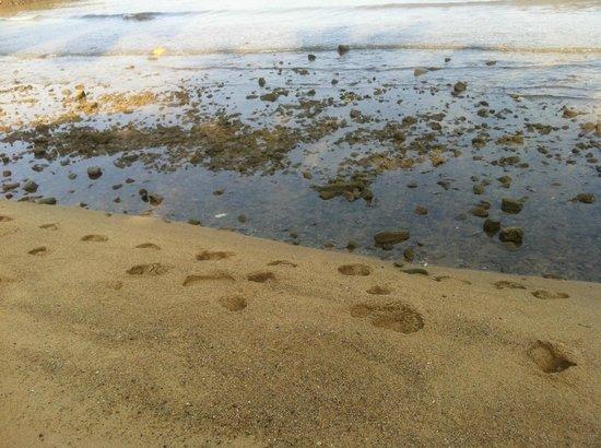 White House Bailan Resort: spiaggia del resort.....per fachiri !
