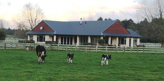 Amberfields Bed & Breakfast: Amberfields B&B is a deluxe farmstay