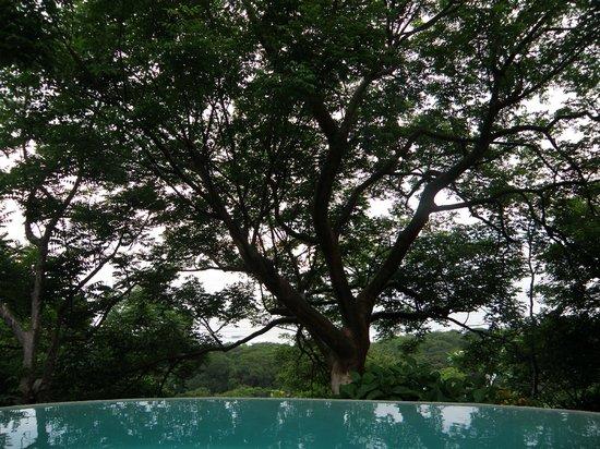 Gumbo Limbo Villas: View from the villa porch