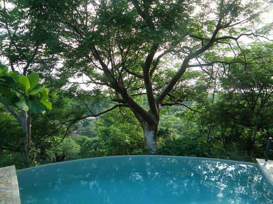Gumbo Limbo Villas: Beautiful Infinity Pool