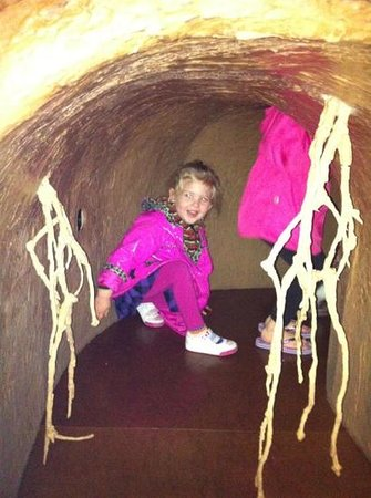 Biodiversity Institute & Natural History Museum: fun in the bug section