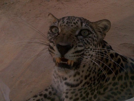 Al Areen Wildlife Sanctuary: sorry to have woken you up!