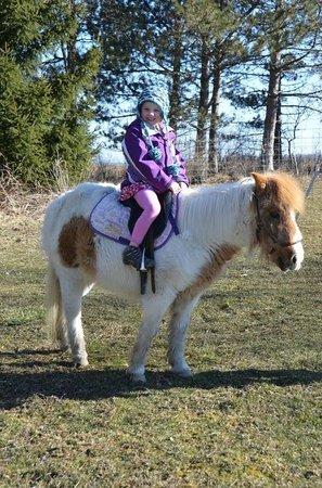 Inn BTween Farm Bed and Breakfast: Pony ride!
