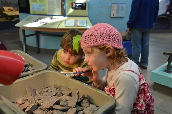 Museum of the Earth: Looking for fossils
