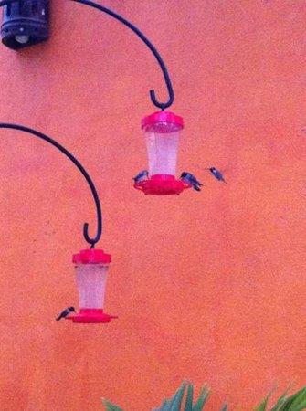 Posada Colibri: Colibríes en el jardín