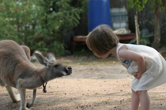 Clandulla Cottages, Beaudesert: Little Girl With Our Kangaroo