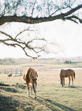 Clandulla Cottages, Beaudesert: Our Horses Grazing
