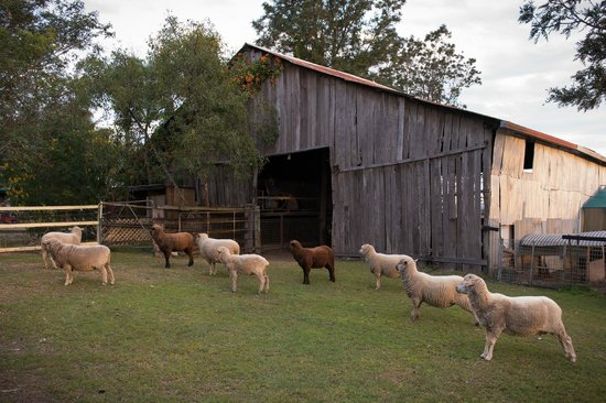 Clandulla Cottages, Beaudesert: Farm Animals