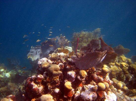 BayView Hotel: Snorkeling in Utila is fantastic!!