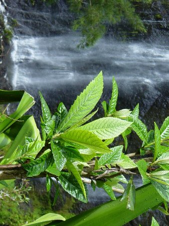 Mafate, Reunion Island: Lush Rainforest