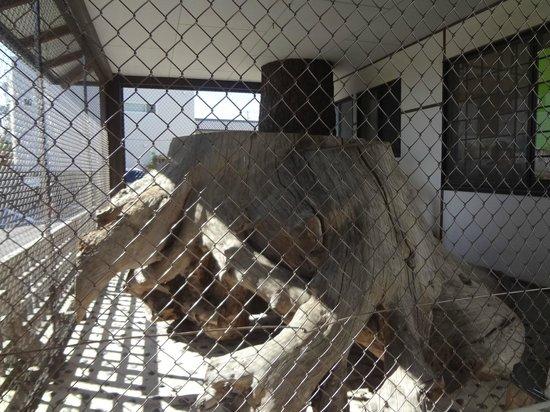 Goyuno matsunamiki Museum