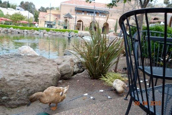 The Little Pear: More ducks appeared by our table waiting for table scraps