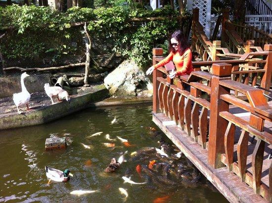 LTC Holiday Pension: Pond