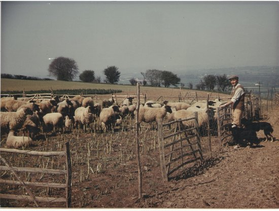 Church Farm Country Cottages: Great Grandfather with the sheep - early 1900s