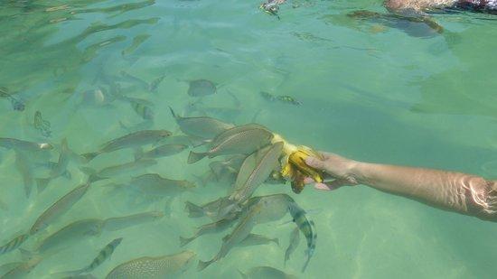 นาไทย รีสอร์ท: Fische füttern