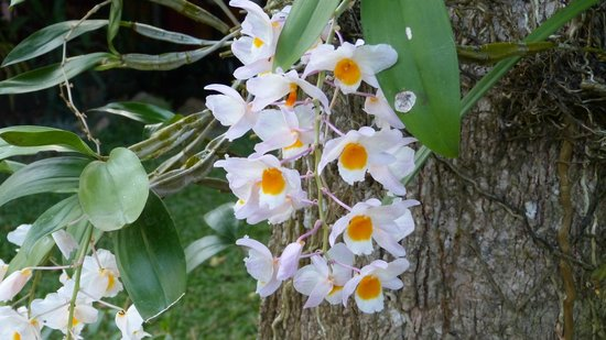 Na-Thai Resort: Orchideen im Garten