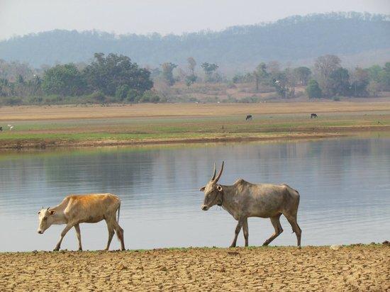 Evolve Back, Kabini: View of Kabini river from the resort