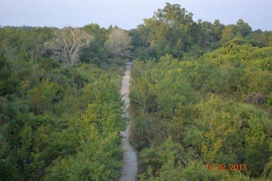 Sundarban: From Watch tower