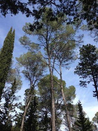 Bois de Montmaur : le bois