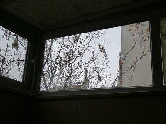 โรงแรมบลูอิสตันบูล: la salle à manger n'a que des fenêtres en hauteur