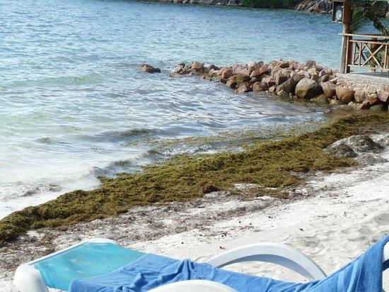 Hotel L'Archipel: plage de l'hotel