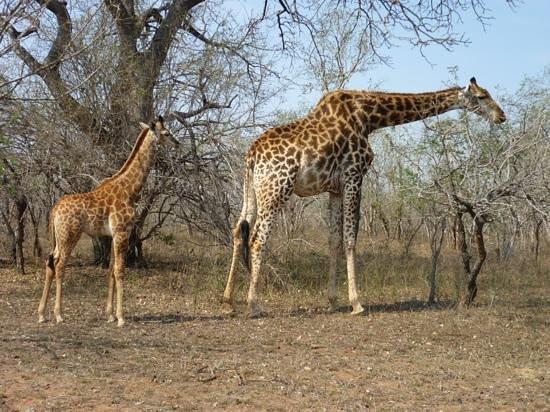 Needles Lodge: local wildlife