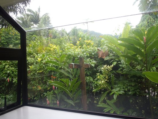Heliconia Hideaway: view from the kitchen