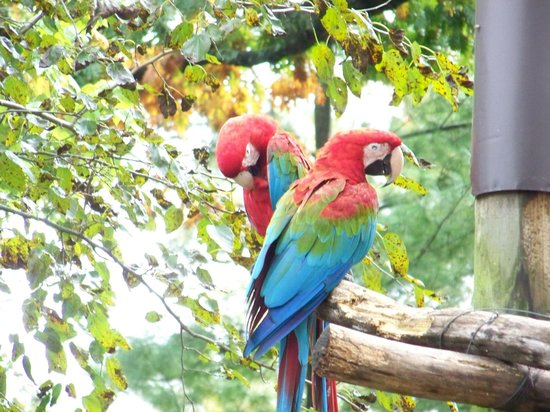 Thurmont, MD: colorful parrots