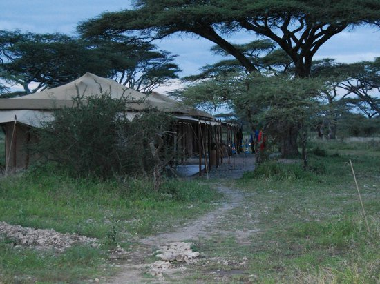 Ndutu Wilderness Camp: tents