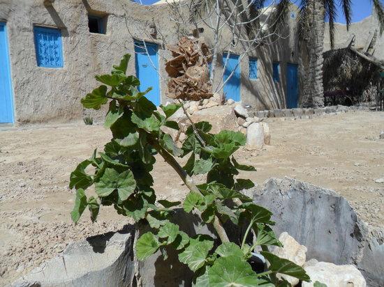 Murmure de Civilisations: jardin