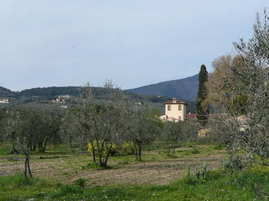 Villa Il Paradisino: our olive trees